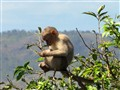 Life is really wonderful for this Monkey