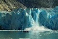 A huge calving ice block fell from the glacier causing a roar and wave!