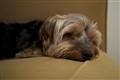 Sleepy Hurley