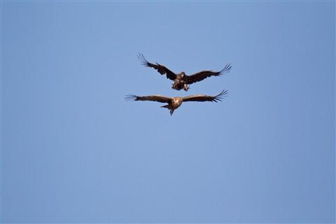 vulture original