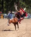 Saddle Bronk