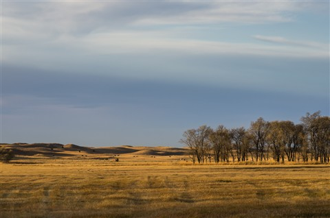 Prairie-1