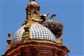 Storks in Toledo, Spain.