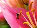 Precarious Fly