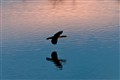 Sunset Cormorant Silhouette 5456