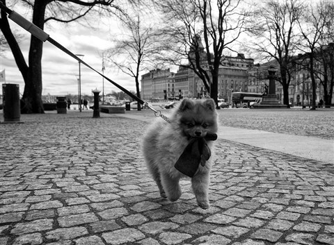 hund_med_handske