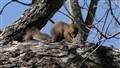 Praying Squirrel