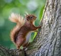 Squirrel moves