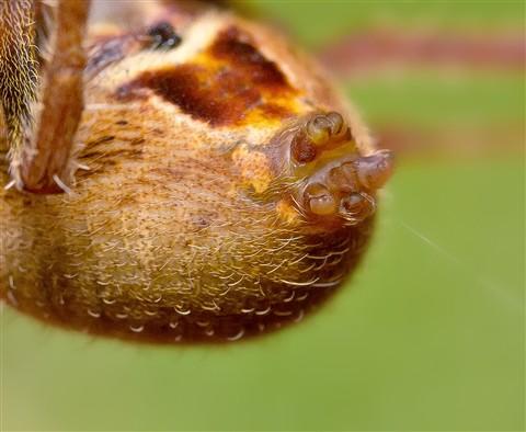spider 02crop