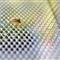 a_Bug