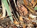 Fall Garter Snake
