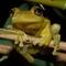 TA_frog_dpr