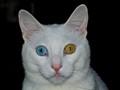 Heterochromia!