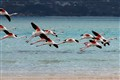 Flamingos Langebaan Lagoon South Africa