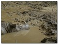 Rhino Cooldown
