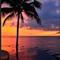 sunset_palm_3