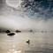 Pelican's Sunrise