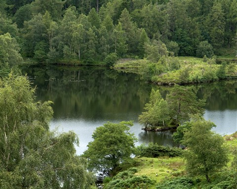 Tarn Hows ,Cumbria
