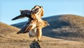 Hawk expanding wings on post