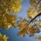 Autumn_Sky