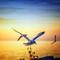 Seagulls In Flight