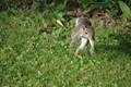 Running_Squirrel