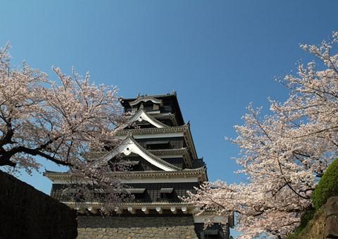 熊本城桜01