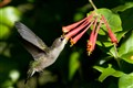 Hummingbird with catch light