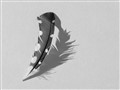 Black and White Feather with Shadow