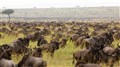 Great Migration on the Serengeti in Tanzania
