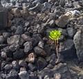 new life between lava