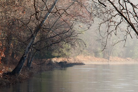 Bending Trees over the Clarion River No5 (D700)