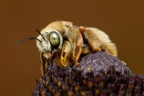 Beesy Bee