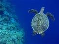 P2190214 - Maldives LilyBeach