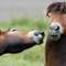_DSC2187 Horses at DP, 15th Sept 2018 - crop