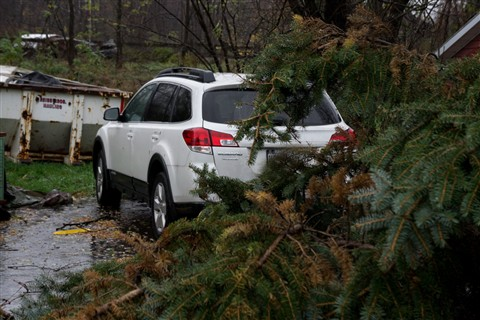 Tree, car, dumpster