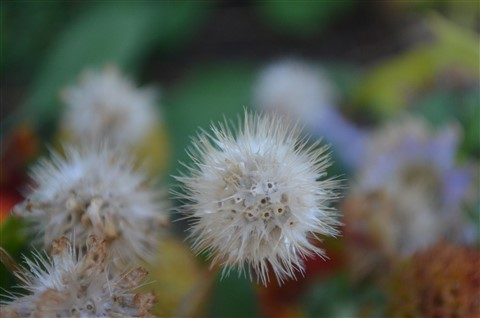 flowers_1204