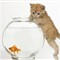 Cat Fish Photography