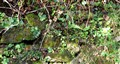 Cornish Hedge in March
