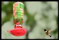 Hummingbird Guest