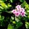 Star Cluster Blossom