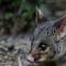 Possum Lateral Head edit (1600x1281)
