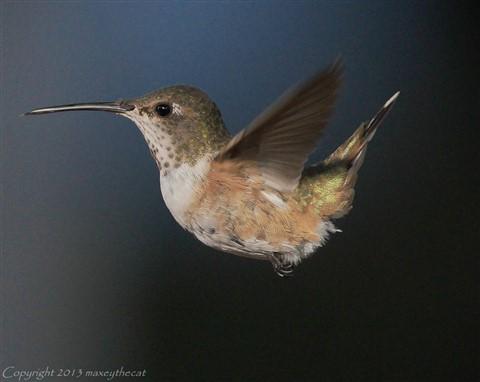 Birding Monday 5