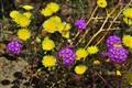 Anza Boreggo Spring Time weeds!