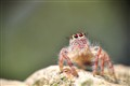 furry spider