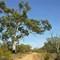 Hattah Trail