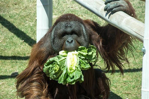 Lettuce Please!