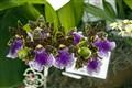 Orquideas - Jardim Botanico  RJ j
