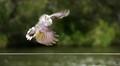 Acrobatic -