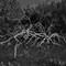 swamptree_01